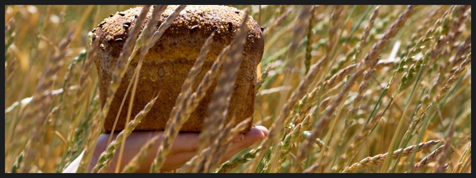 ¿Qué es el Gluten? y ¿Por qué lo evito?